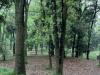 2019年浙江林业产业总产值达6646亿元