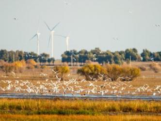 科尔沁国家级自然保护区迎万只候鸟 珍稀鸟类首次大批落脚